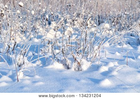 Winter landscape view - frosty winter plants in the winter forest under rays of sunset light natural landscape. Focus at the frozen plants. Winter colorful landscape.