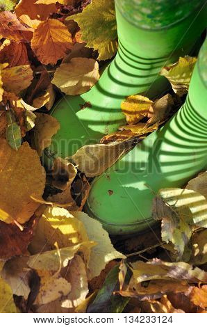 green rubber boots in dead golden leaves