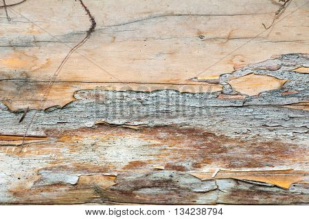 A log of wood. Old and cracked. The surface is rough and uneven. You can see the bark.