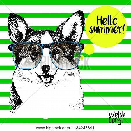 Vector close up portrait of welsh corgi pembroke wearing the sunglassess. Bright hello summer corgi portrait. Hand drawn domestic pet dog illustration. Isolated on background with green stripes.