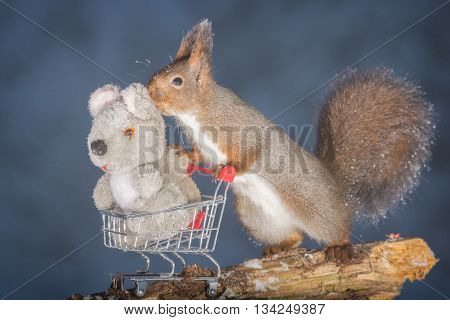 red squirrel with shopping cart and doll squirrel