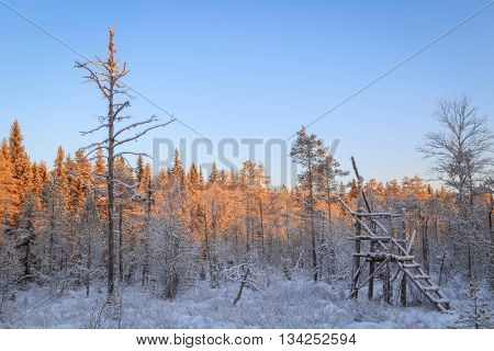 snow landscape with hunting tower  in sun light