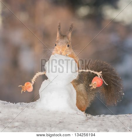 red squirrels behind a snowman with brier