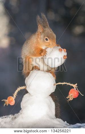 red squirrels on snowman with snowmans head