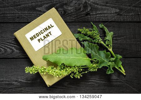 Medicinal plant Sorrel horse (Rumex confertus Asiatic Dock) and herbalist handbook. Used in herbal medicine cooking (limited) food for animals for the production of dyes leather tanning