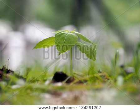 Young plant - green sprout in the grass