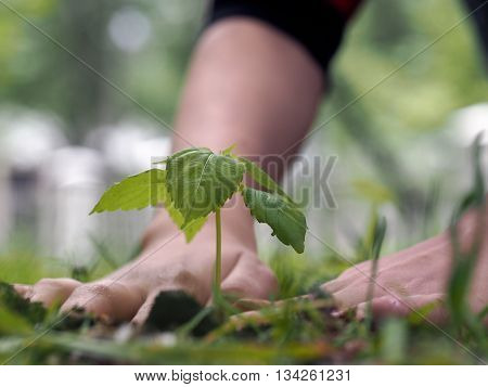 Human hands and a small sprout - young green plant