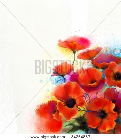 Watercolor red poppy flower painting. Hand paint poppies flowers in soft color and blur style White color background. Hand painted Spring floral seasonal nature background