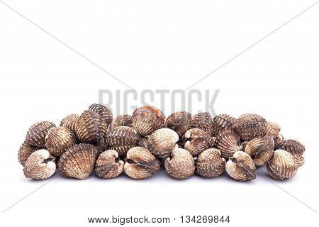 Raw Blood Cockle Isolated On White Background