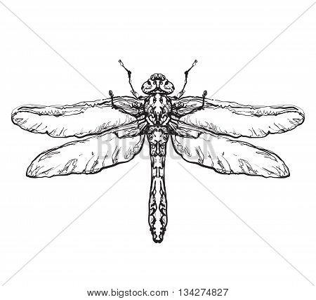 Insect with wing. Black dragonfly on white background isolated.