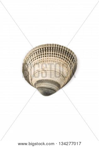 Seashell Isolated on White Background (with clipping path)
