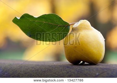 Quince With A Green Leaf On A Wooden Railing