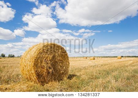 Hay stack on the field on bright day