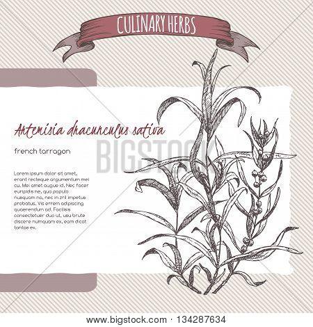 Artemisia dracunculus sativa aka French tarragon vector hand drawn sketch. Culinary herbs collection. Great for cooking, medical, gardening design.