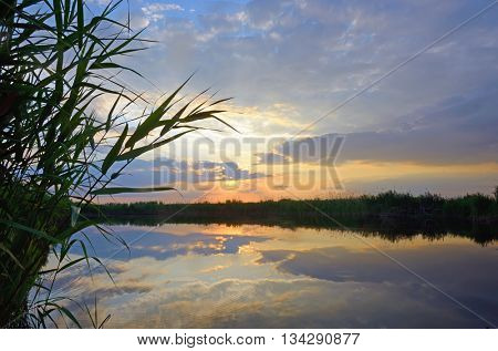 Reed against the sunset on Danube Delta