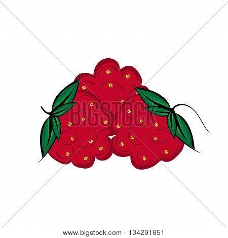 Hand drawn raspberries berries close up. Three vector crimson berries. Hand painted.