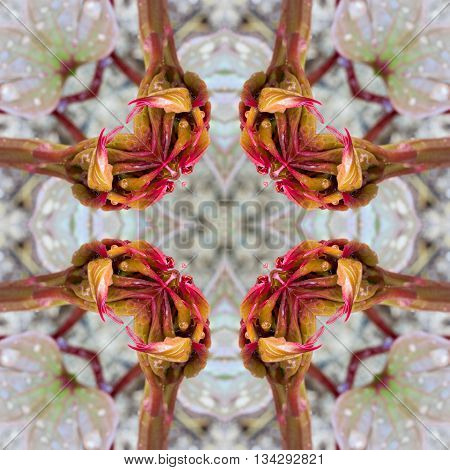 abstract geometric decorative pattern with a kaleidoscope effect color pink valley. for greetings or wrapping paper