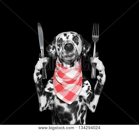 dog wants to eat and hold knife and fork -- isolated on black