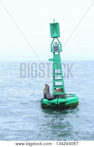 Two California sea lions are found resting on a buoy during a boat ride.
