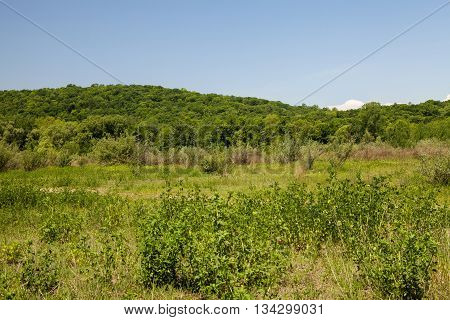 The beautiful green mountains of the Allamuchy Mountain State Park
