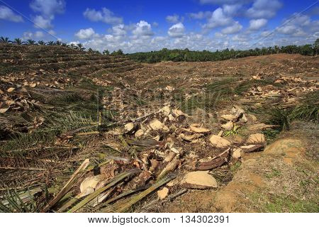 Deforestation environmental problem. Destruction of rain forest in Borneo for palm oil plantations.