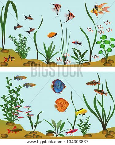 Different species of freshwater fish in aquarium. Color vector illustration.