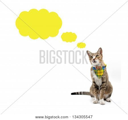 Cat Looking Up Above Speech Bubble