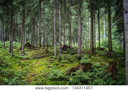 Deep forest with moss, grass and other plants