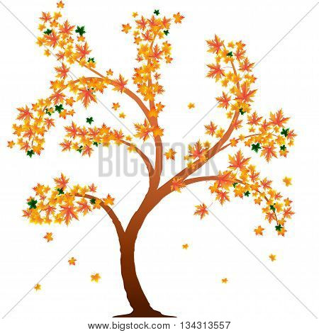 autumn tree with deciduous leaves in yellow and green colors