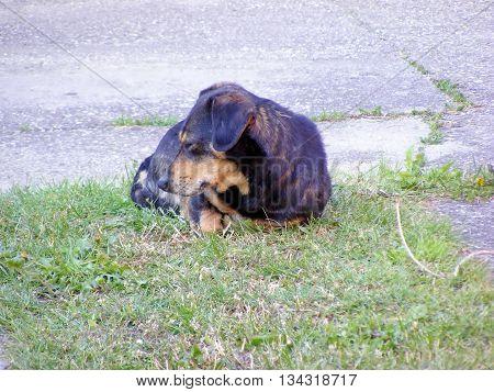 Dog lie on the ground and sleeping