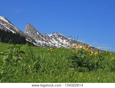 Spring scene in the Toggenburg valley Swiss Alps. Buttercups and peak of the Churfirsten Range.