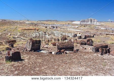 Petrified Trunks And Wood In Petrified Forest National Park, Arizona,  Usa