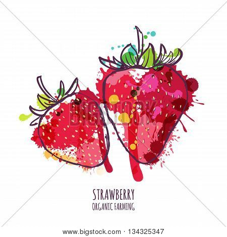 Vector Watercolor Hand Drawn Red Strawberries, Isolated On White Background. Summer Berries Colorful