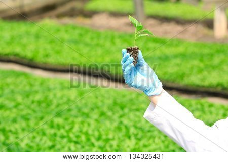 Female farmer at work in large greenhouse