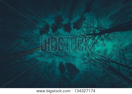Spooky Dark Forest Canopy Nature Photo Background.