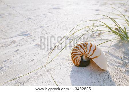 nautilus shell on white Florida beach sand under sun light, shallow dof