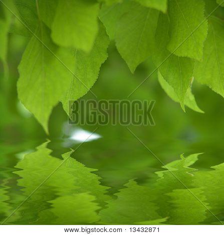 Frische grüne Blätter über Wasser