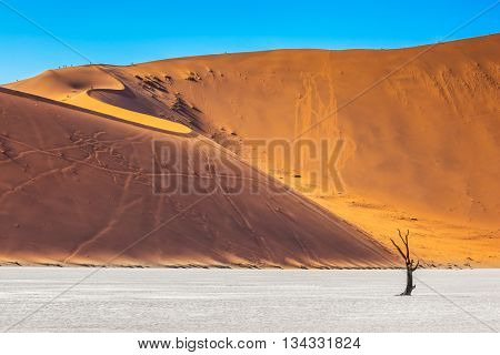 Orange-gold sand dunes around the dried up lake. On the crest of the dunes are tourists. Travel to Namibia. Namib-Naukluft National Park