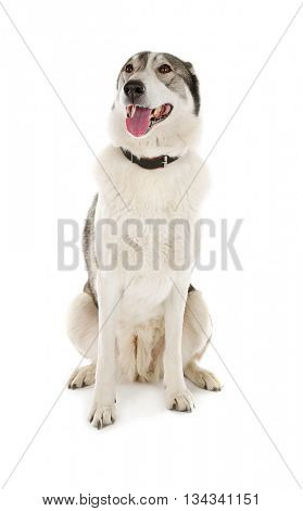Dog and food isolated on white