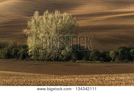 Plowed field in countryside in South Moravia, Czech Republic
