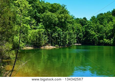 North American Deciduous Forest surrounding Tims Ford Lake, TN