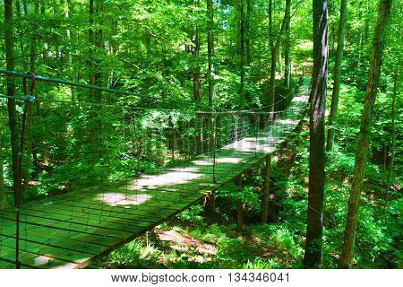 Pedestrian Suspension Bridge surrounded by a deciduous lush green forest taken at Tims Ford State Park, TN