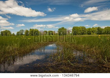 reflection of the sky in water in a swamp near the forest