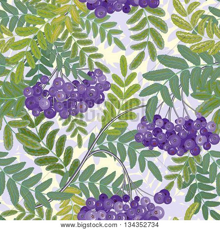 Vector seamless pattern with berries. Violet berries bunch and blue green leaves on a white Background
