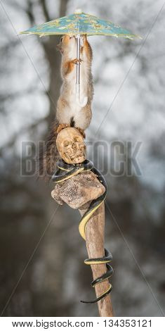red squirrel on skull with snake holding a umbrella