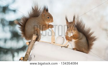 red squirrels with sledge and eggs on ice