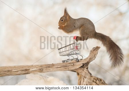 red squirrel on shopping cart with eggs