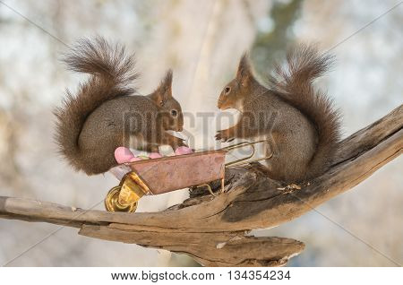 red squirrels with wheelbarrow and eggs in sun light