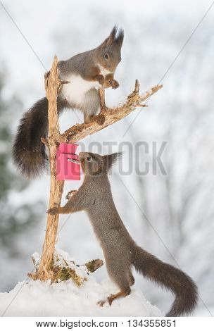 red squirrels on tree trunk with snow and mailbox
