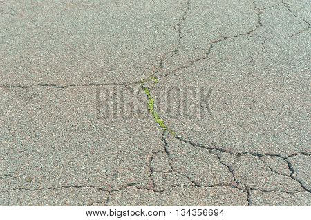 Grass grows from cracks in the road background texture